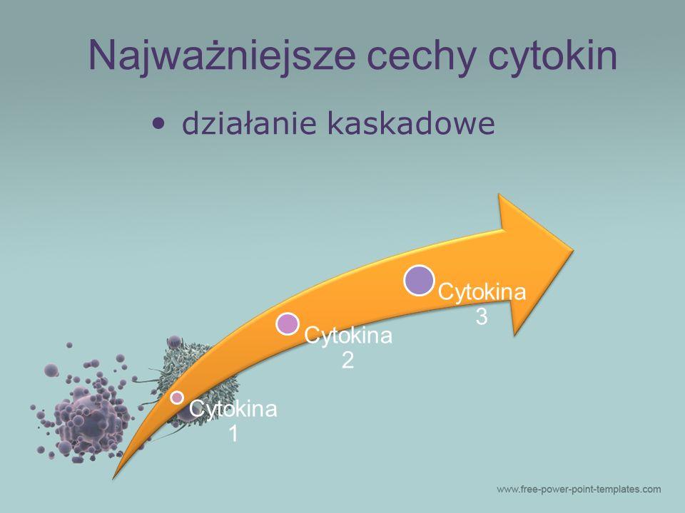 działanie kaskadowe Cytokina 1 Cytokina 2 Cytokina 3 Najważniejsze cechy cytokin