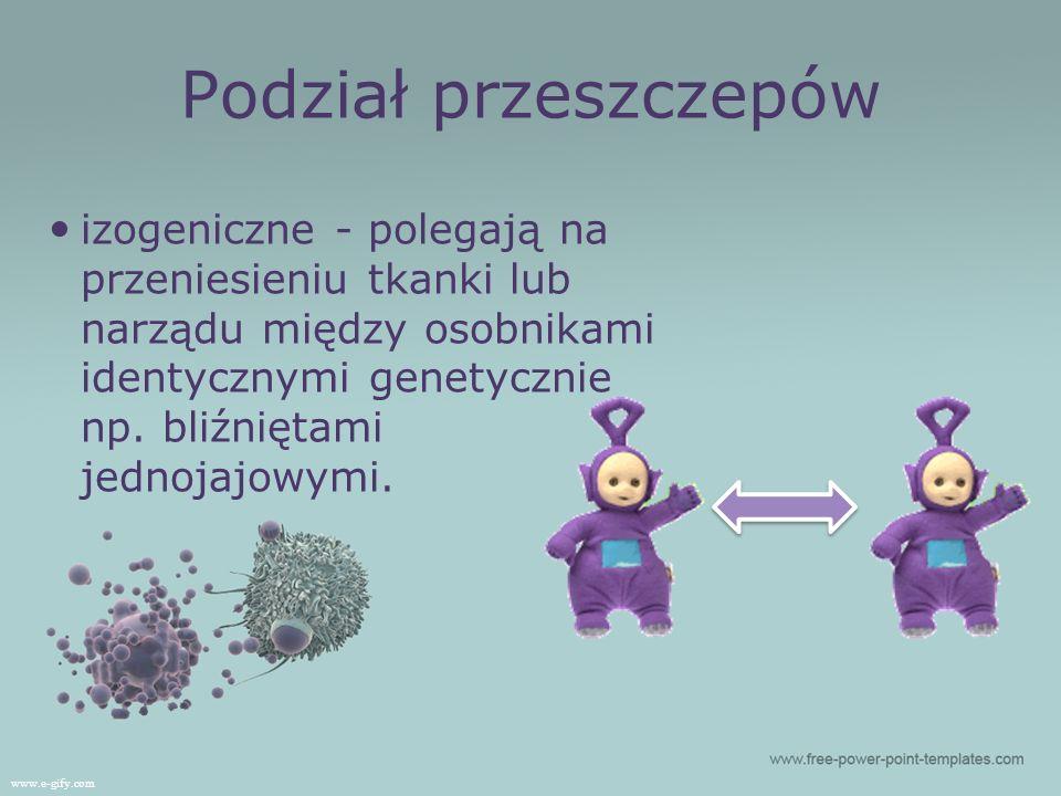 Podział przeszczepów izogeniczne - polegają na przeniesieniu tkanki lub narządu między osobnikami identycznymi genetycznie np. bliźniętami jednojajowy