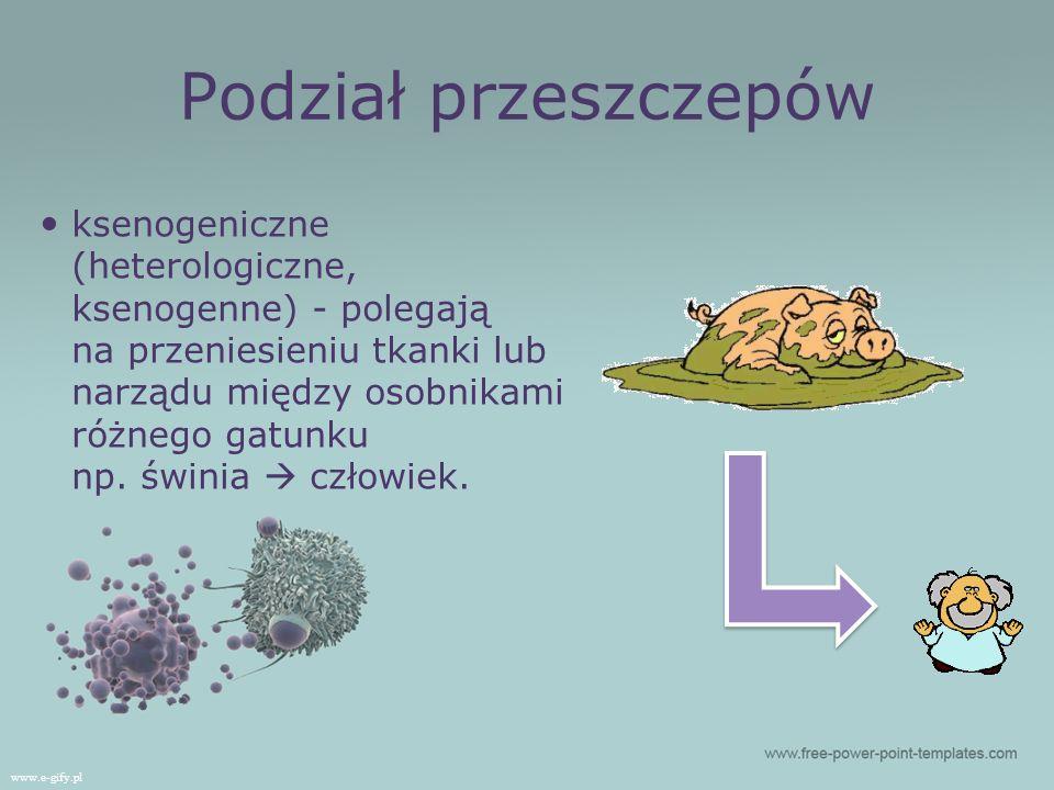 ksenogeniczne (heterologiczne, ksenogenne) - polegają na przeniesieniu tkanki lub narządu między osobnikami różnego gatunku np.