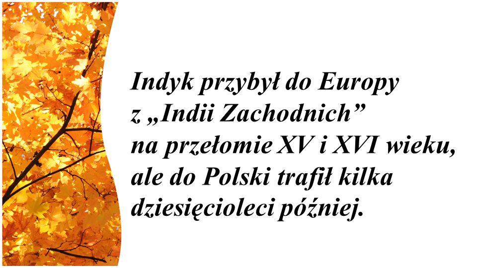 """Indyk przybył do Europy z """"Indii Zachodnich na przełomie XV i XVI wieku, ale do Polski trafił kilka dziesięcioleci później."""