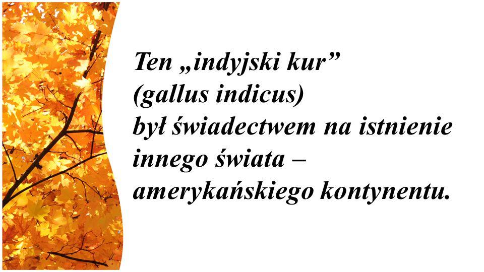 """Ten """"indyjski kur (gallus indicus) był świadectwem na istnienie innego świata – amerykańskiego kontynentu."""