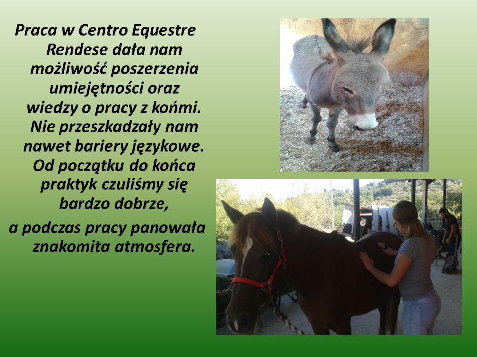 Praca w Centro Equestre Rendese dała nam możliwość poszerzenia umiejętności oraz wiedzy o pracy z końmi.