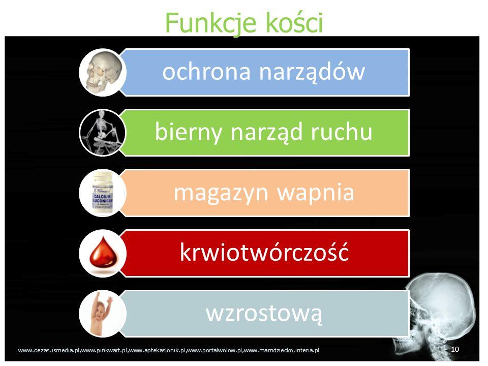 Funkcje kości 10 ochrona narządów bierny narząd ruchu magazyn wapnia krwiotwórczość wzrostową www.cezas.ismedia.pl,www.pinkwart.pl,www.aptekaslonik.pl,www.portalwolow.pl,www.mamdziecko.interia.pl
