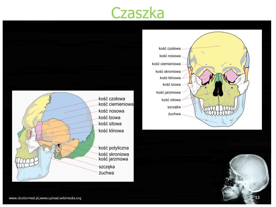 Czaszka 13 www.doctormed.pl,www.upload.wikimedia.org