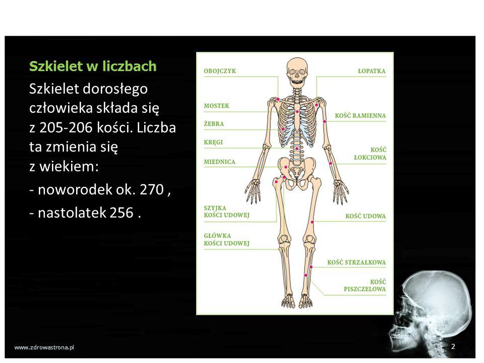 Szkielet w liczbach Szkielet dorosłego człowieka składa się z 205-206 kości. Liczba ta zmienia się z wiekiem: - noworodek ok. 270, - nastolatek 256. 2