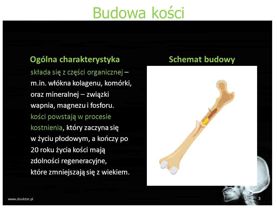 Budowa kości Ogólna charakterystyka składa się z części organicznej – m.in. włókna kolagenu, komórki, oraz mineralnej – związki wapnia, magnezu i fosf