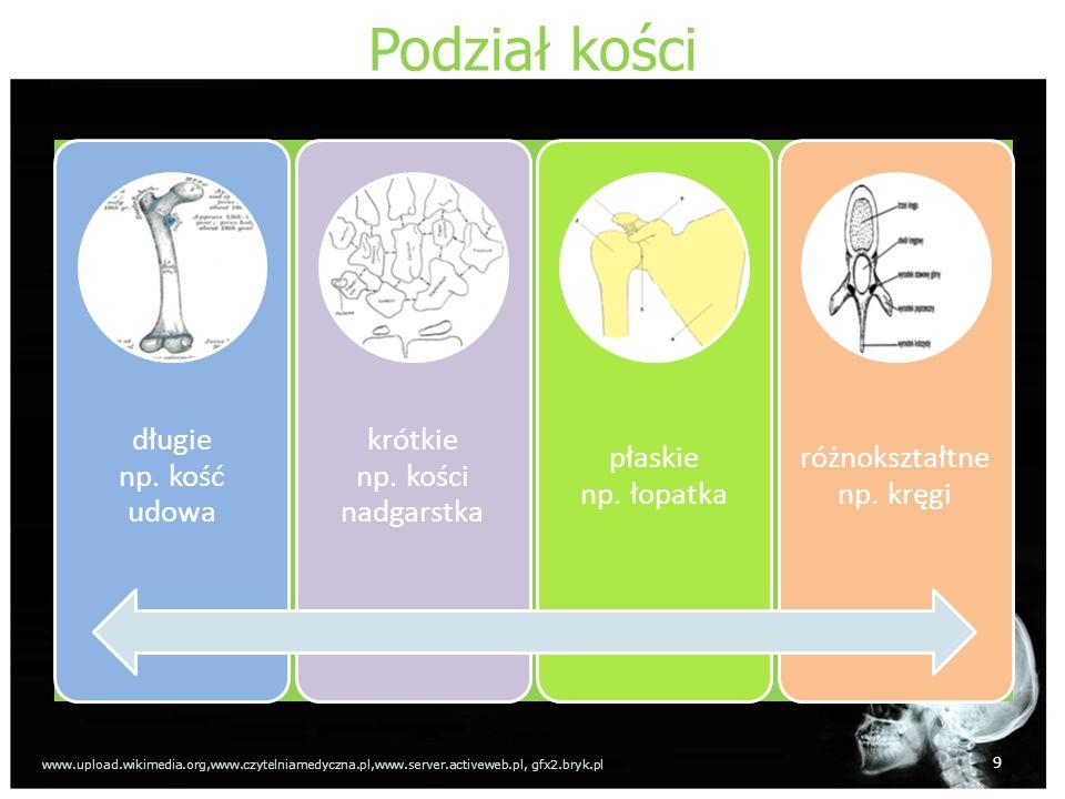 Podział kości długie np.kość udowa krótkie np. kości nadgarstka płaskie np.