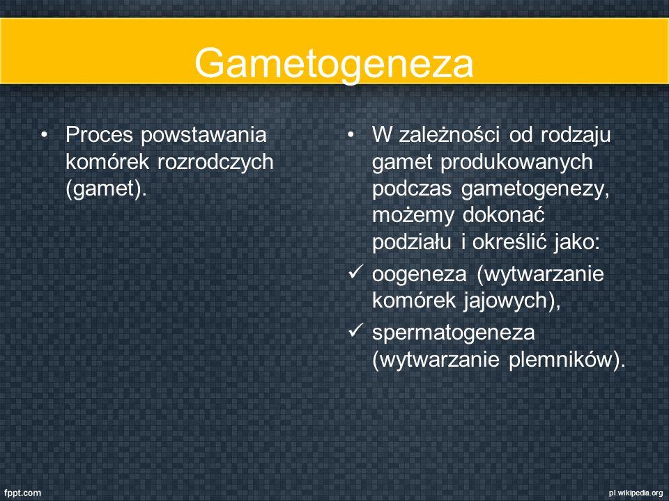 Gametogeneza Proces powstawania komórek rozrodczych (gamet).