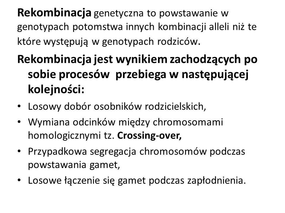 Crossing-over – proces wymiany materiału genetycznego między chromosomami homologicznymi, w wyniku którego zwiększa się zmienność genetyczna.