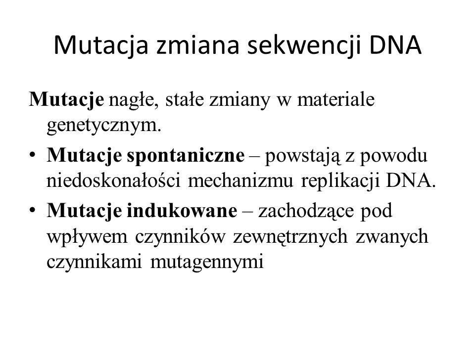 Mutacja zmiana sekwencji DNA Mutacje nagłe, stałe zmiany w materiale genetycznym. Mutacje spontaniczne – powstają z powodu niedoskonałości mechanizmu