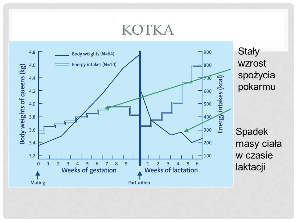 KOTKA Spadek masy ciała w czasie laktacji Stały wzrost spożycia pokarmu
