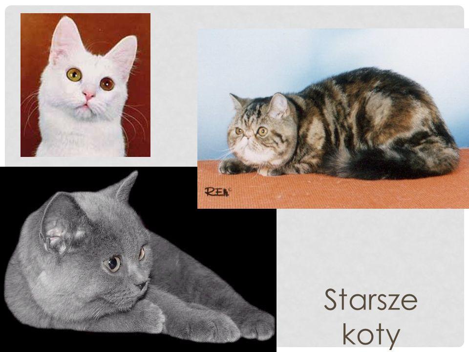 Starsze koty