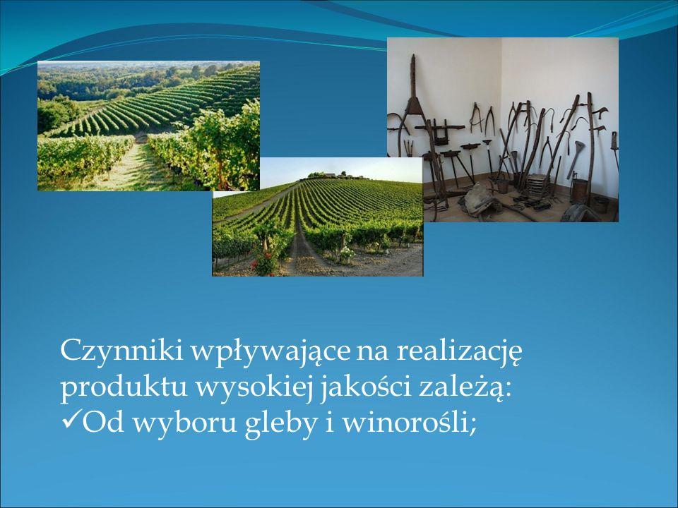 Czynniki wpływające na realizację produktu wysokiej jakości zależą: Od wyboru gleby i winorośli;