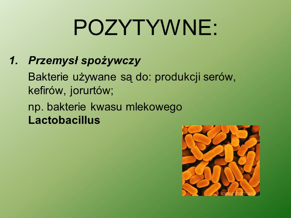 POZYTYWNE: 1.Przemysł spożywczy Bakterie używane są do: produkcji serów, kefirów, jorurtów; np.