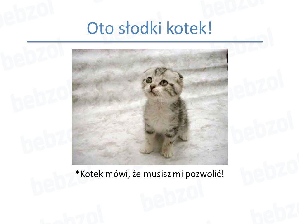 Oto słodki kotek! *Kotek mówi, że musisz mi pozwolić!