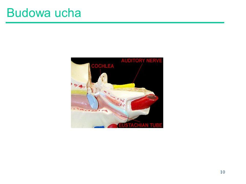 11 Budowa ucha Inner ear semicircular canals