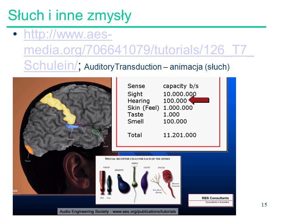 15 Słuch i inne zmysły http://www.aes- media.org/706641079/tutorials/126_T7_ Schulein/; AuditoryTransduction – animacja (słuch)http://www.aes- media.o