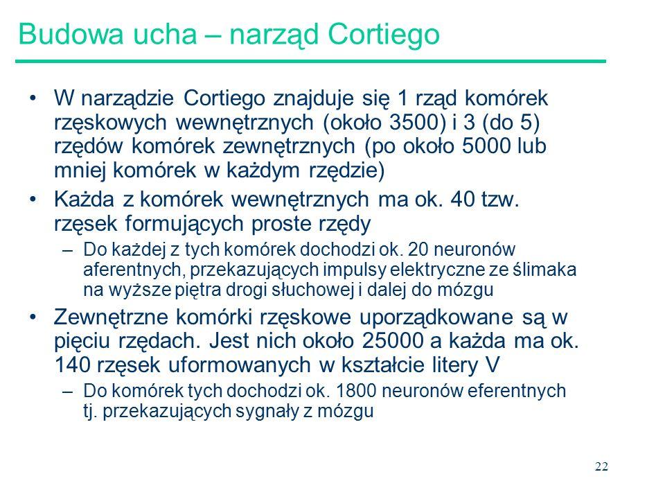 22 Budowa ucha – narząd Cortiego W narządzie Cortiego znajduje się 1 rząd komórek rzęskowych wewnętrznych (około 3500) i 3 (do 5) rzędów komórek zewnętrznych (po około 5000 lub mniej komórek w każdym rzędzie) Każda z komórek wewnętrznych ma ok.