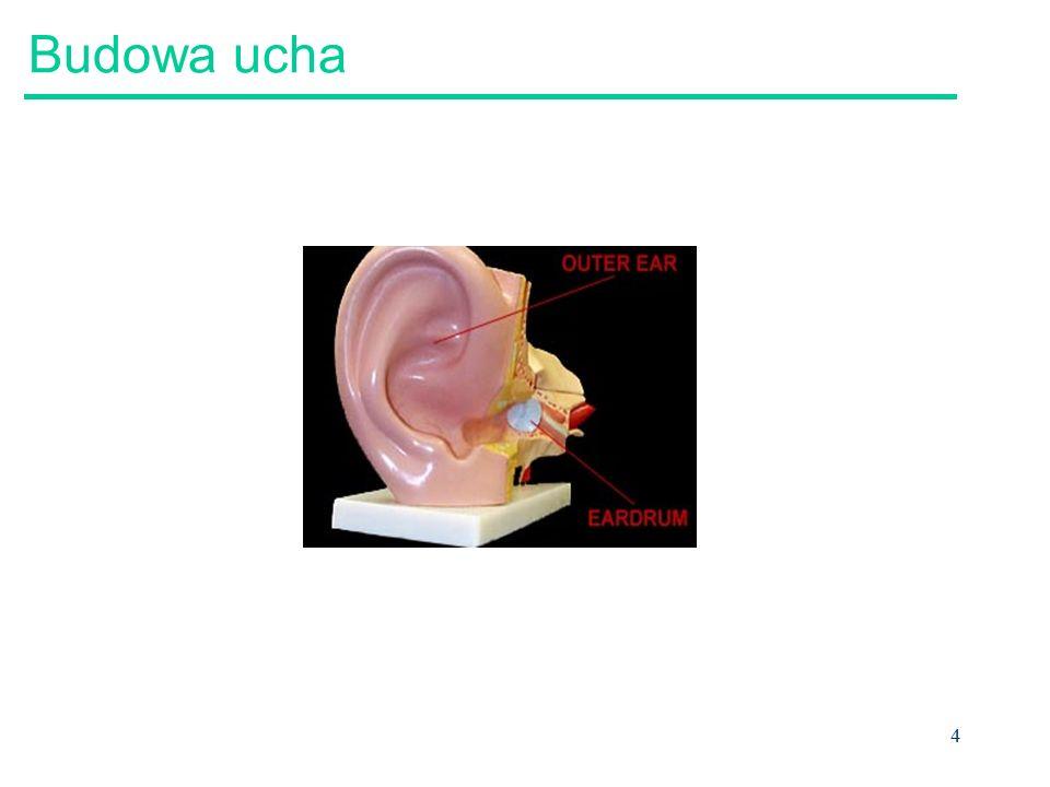 4 Budowa ucha