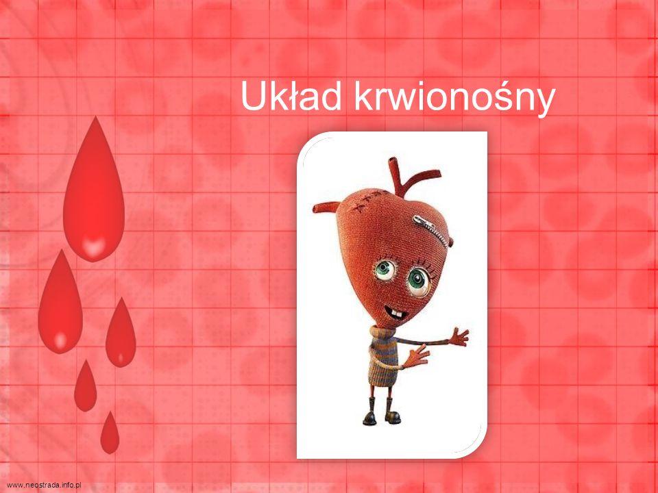 Układ krwionośny www.neostrada.info.pl