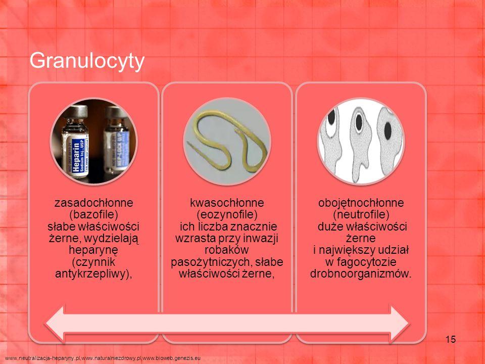 Granulocyty 15 zasadochłonne (bazofile) słabe właściwości żerne, wydzielają heparynę (czynnik antykrzepliwy), kwasochłonne (eozynofile) ich liczba znacznie wzrasta przy inwazji robaków pasożytniczych, słabe właściwości żerne, obojętnochłonne (neutrofile) duże właściwości żerne i największy udział w fagocytozie drobnoorganizmów.