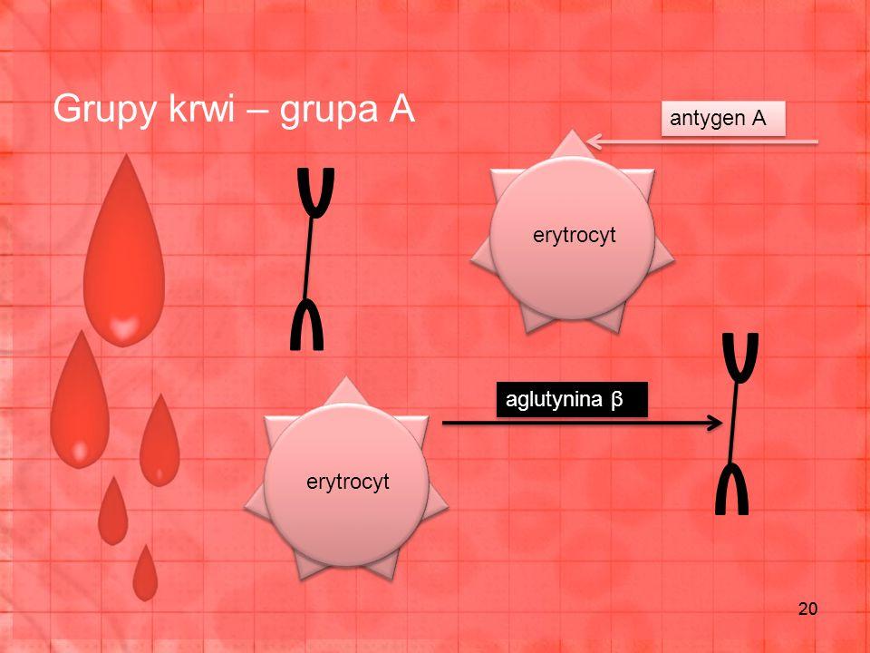 Grupy krwi – grupa A 20 erytrocyt antygen A aglutynina β