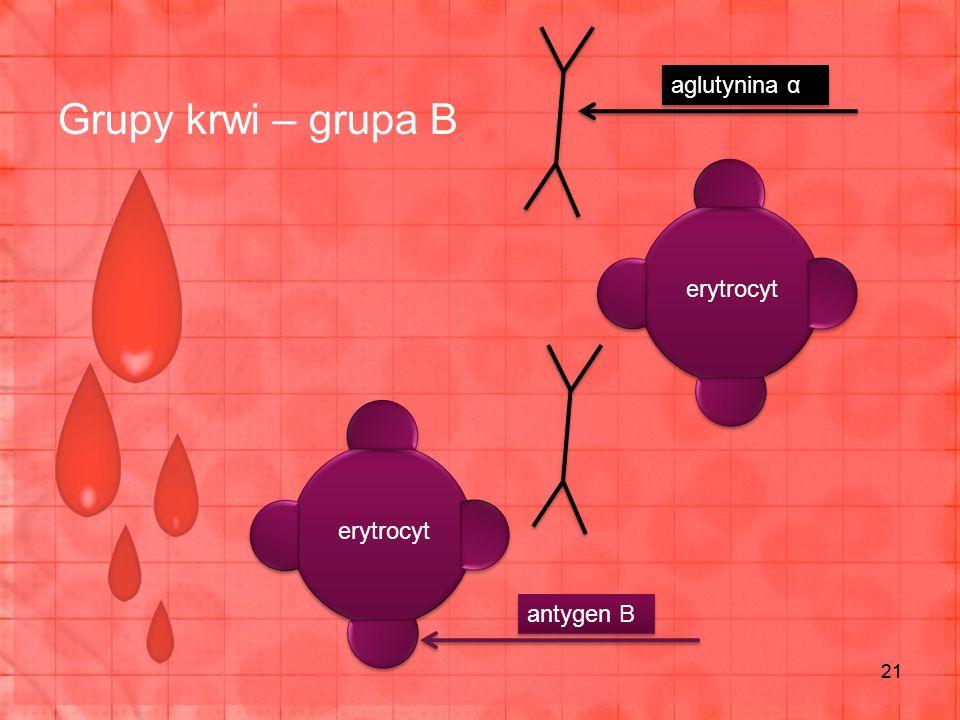 Grupy krwi – grupa B 21 erytrocyt antygen B aglutynina α
