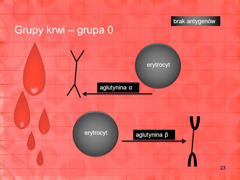 Grupy krwi – grupa 0 23 erytrocyt brak antygenów aglutynina α aglutynina β