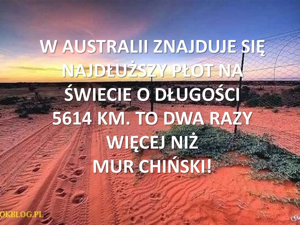 W AUSTRALII ZNAJDUJE SIĘ NAJDŁUŻSZY PŁOT NA ŚWIECIE O DŁUGOŚCI 5614 KM. TO DWA RAZY WIĘCEJ NIŻ MUR CHIŃSKI!