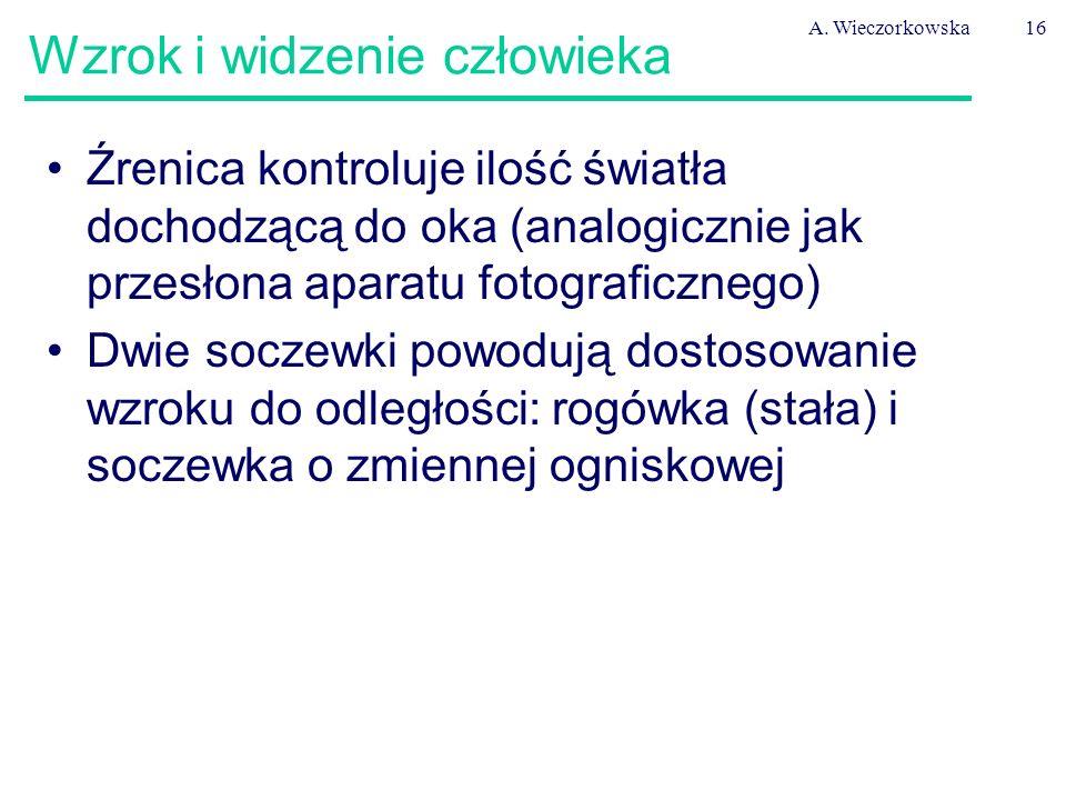 A. Wieczorkowska16 Wzrok i widzenie człowieka Źrenica kontroluje ilość światła dochodzącą do oka (analogicznie jak przesłona aparatu fotograficznego)