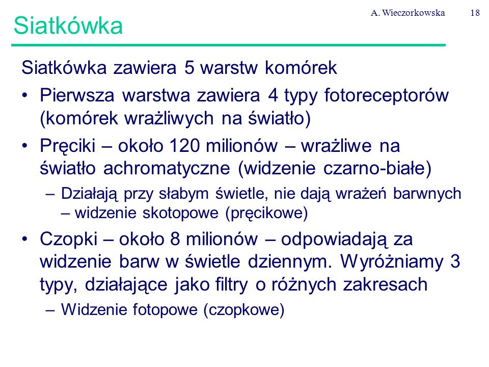 A. Wieczorkowska18 Siatkówka Siatkówka zawiera 5 warstw komórek Pierwsza warstwa zawiera 4 typy fotoreceptorów (komórek wrażliwych na światło) Pręciki