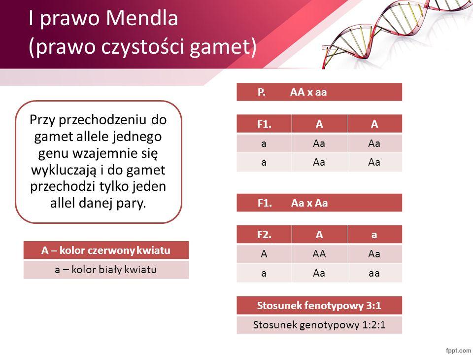 I prawo Mendla (prawo czystości gamet) F1.AA aAa a 10 Przy przechodzeniu do gamet allele jednego genu wzajemnie się wykluczają i do gamet przechodzi t