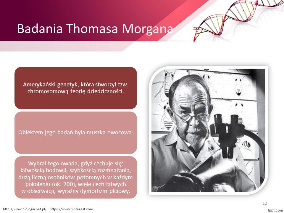 Badania Thomasa Morgana Amerykański genetyk, która stworzył tzw. chromosomową teorię dziedziczności. Obiektem jego badań była muszka owocowa. Wybrał t