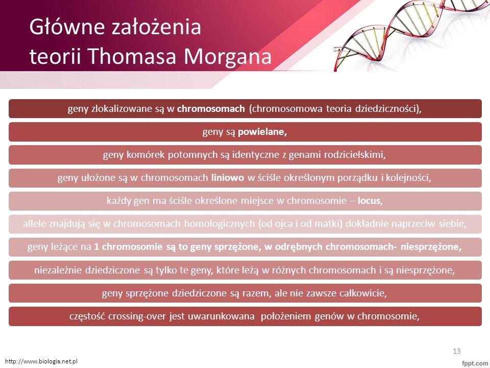 Główne założenia teorii Thomasa Morgana geny zlokalizowane są w chromosomach (chromosomowa teoria dziedziczności),geny są powielane,geny komórek potom