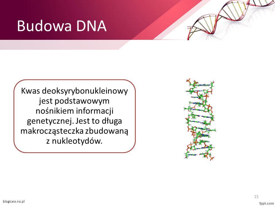 Budowa DNA Kwas deoksyrybonukleinowy jest podstawowym nośnikiem informacji genetycznej. Jest to długa makrocząsteczka zbudowaną z nukleotydów. 15 blog