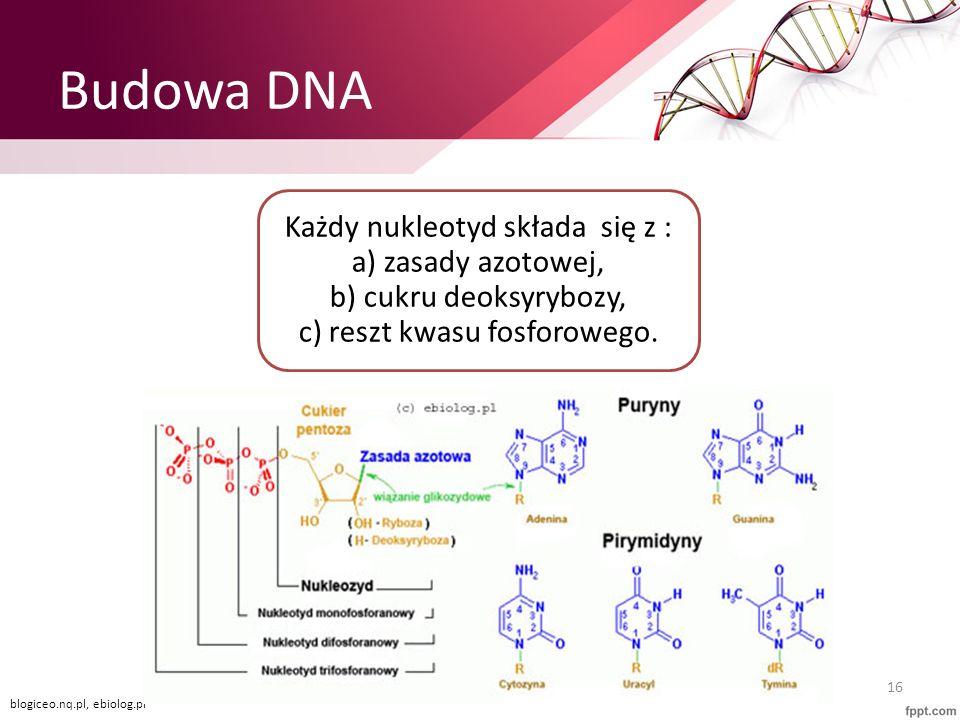 Budowa DNA Każdy nukleotyd składa się z : a) zasady azotowej, b) cukru deoksyrybozy, c) reszt kwasu fosforowego. 16 blogiceo.nq.pl, ebiolog.pl