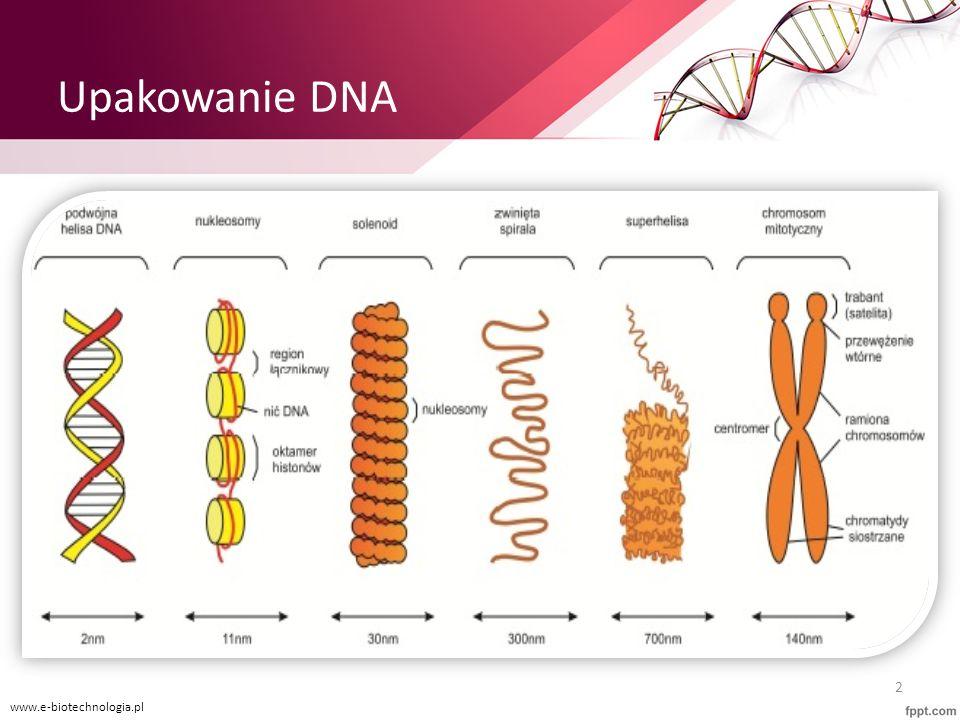 Upakowanie DNA www.e-biotechnologia.pl 2