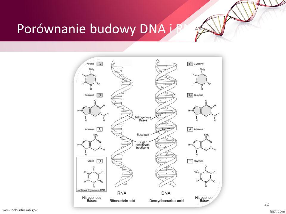 Porównanie budowy DNA i RNA 22 www.ncbi.nlm.nih.gov