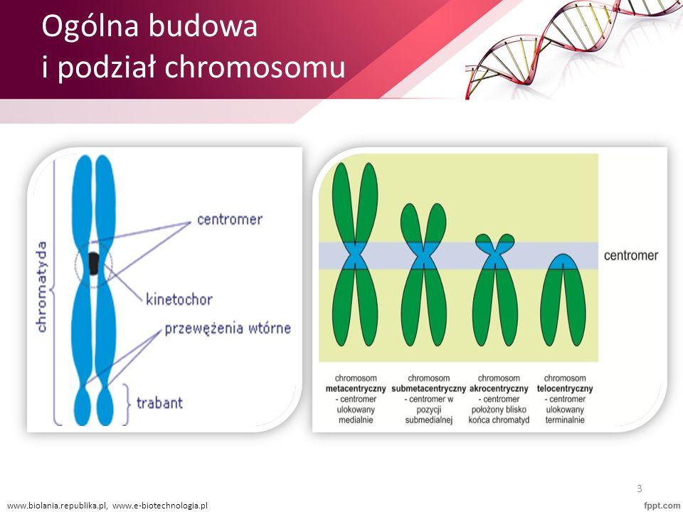 Ogólna budowa i podział chromosomu 3 www.biolania.republika.pl, www.e-biotechnologia.pl
