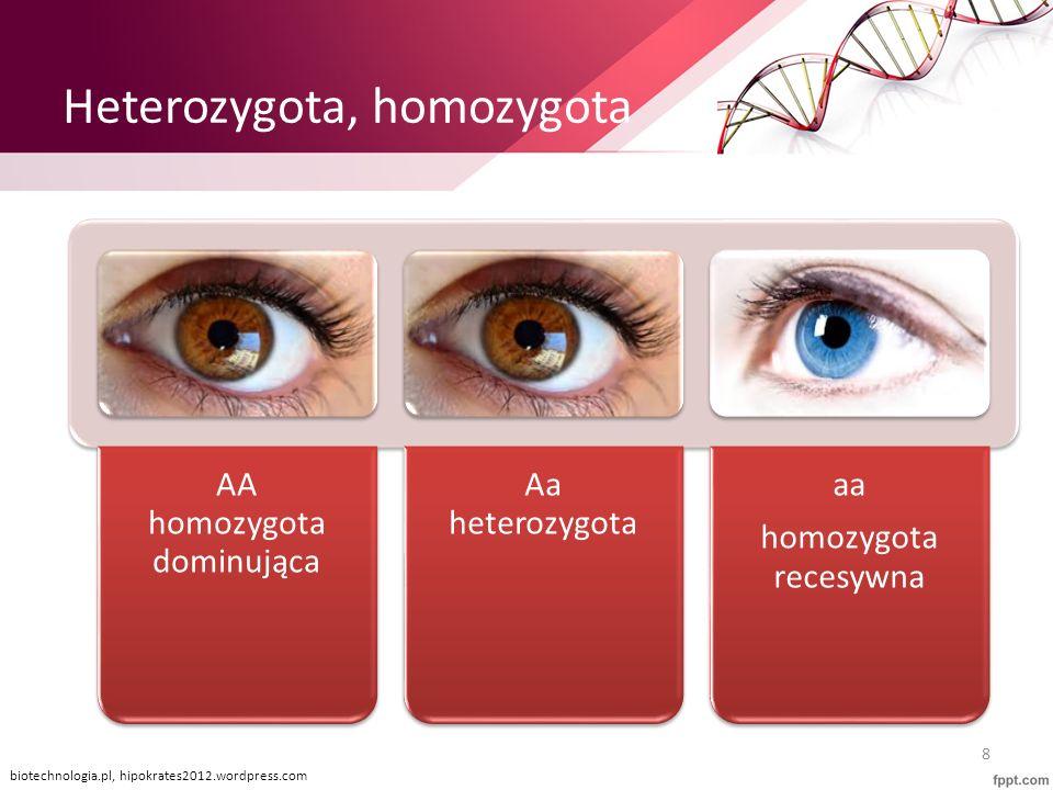 Heterozygota, homozygota AA homozygota dominująca Aa heterozygota aa homozygota recesywna biotechnologia.pl, hipokrates2012.wordpress.com 8