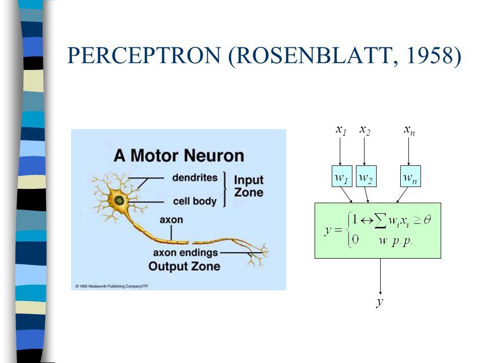 PERCEPTRON (ROSENBLATT, 1958) w1w1 x1x1 x2x2 xnxn y w2w2 wnwn