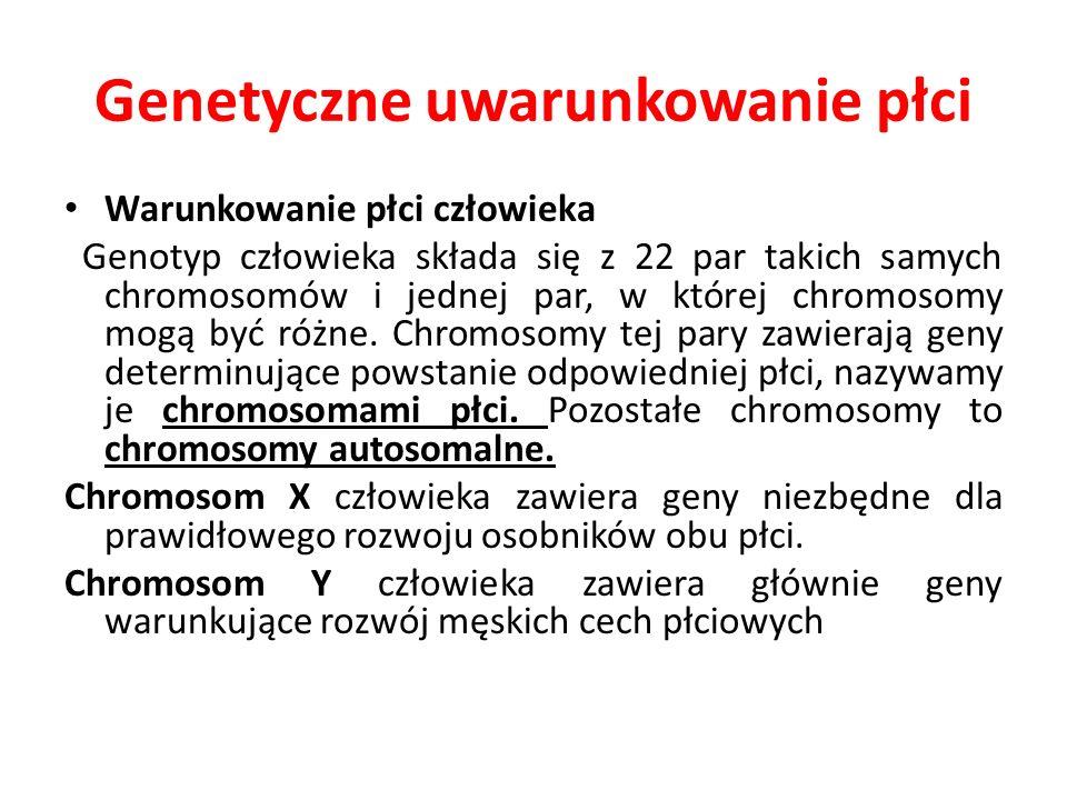 Genetyczne uwarunkowanie płci Warunkowanie płci człowieka Genotyp człowieka składa się z 22 par takich samych chromosomów i jednej par, w której chrom