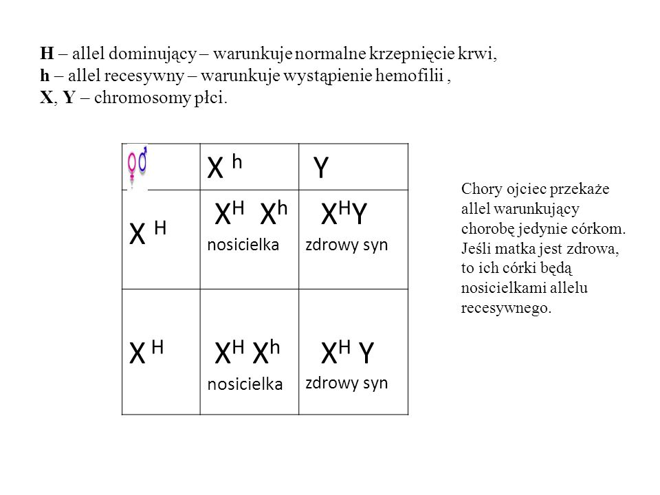 H – allel dominujący – warunkuje normalne krzepnięcie krwi, h – allel recesywny – warunkuje wystąpienie hemofilii, X, Y – chromosomy płci. X h Y X H X
