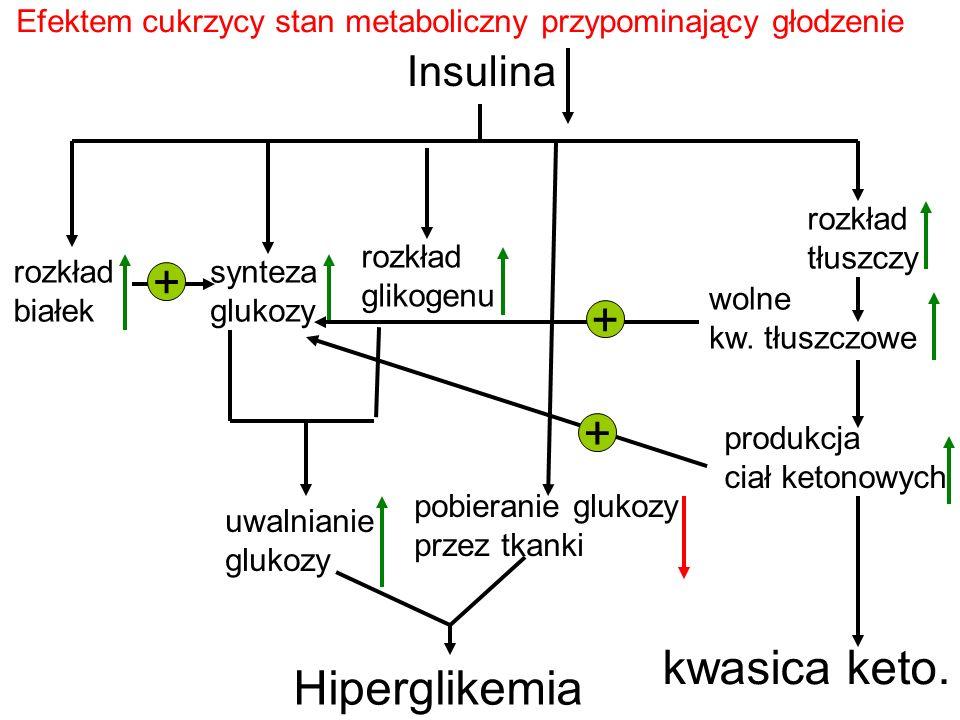 Insulina pobieranie glukozy przez tkanki rozkład białek synteza glukozy + rozkład glikogenu uwalnianie glukozy Hiperglikemia rozkład tłuszczy wolne kw