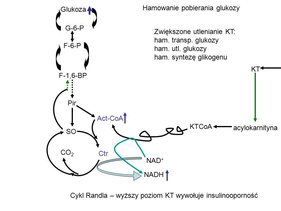 Glukoza G-6-P F-6-P F-1,6-BP Pir SO Ctr CO 2 Act-CoA NAD + NADH KT acylokarnityna KTCoA Hamowanie pobierania glukozy Zwiększone utlenianie KT: ham. tr