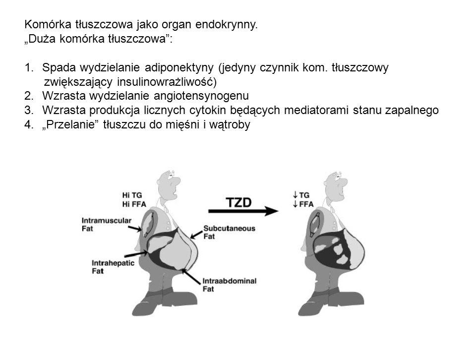 """Komórka tłuszczowa jako organ endokrynny. """"Duża komórka tłuszczowa"""": 1.Spada wydzielanie adiponektyny (jedyny czynnik kom. tłuszczowy zwiększający ins"""