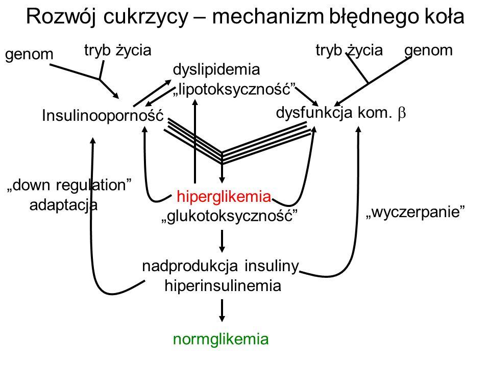 Rozwój cukrzycy – mechanizm błędnego koła Insulinooporność genom tryb życia dysfunkcja kom.  genomtryb życia hiperglikemia nadprodukcja insuliny hipe