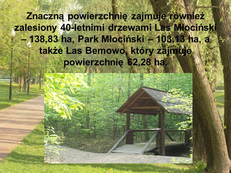 Znaczną powierzchnię zajmuje również zalesiony 40-letnimi drzewami Las Młociński – 138,83 ha, Park Młociński – 103,13 ha, a także Las Bemowo, który za