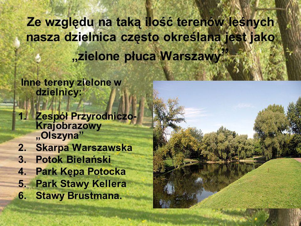 """Ze względu na taką ilość terenów leśnych nasza dzielnica często określana jest jako """"zielone płuca Warszawy """" Inne tereny zielone w dzielnicy: 1.Zespó"""