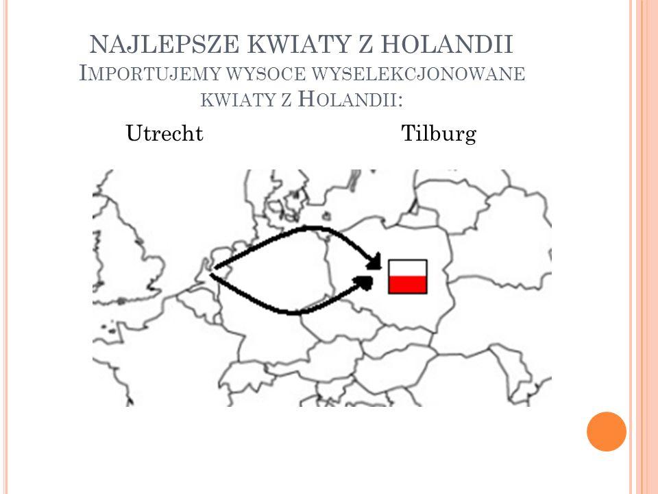 NAJLEPSZE KWIATY Z HOLANDII I MPORTUJEMY WYSOCE WYSELEKCJONOWANE KWIATY Z H OLANDII : UtrechtTilburg
